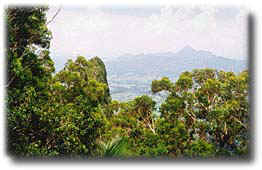 Mt Warning, home of macadamias