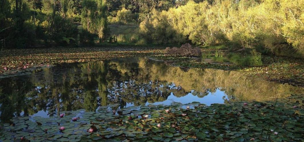 macnut macadamia new zealand lake